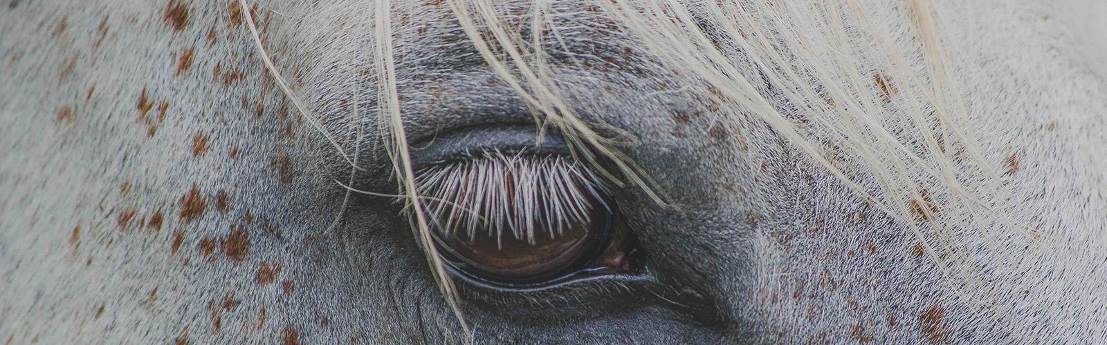 Horseback Riding on Waiheke Islands unspoilt Far End